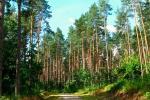 Lesa Serebrjanborskogo Lesnichestva