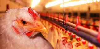 Минэкологии выиграло 17 млн. рублей у Одинцовской птицефабрики