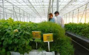 НИИ овощеводства Одинцово